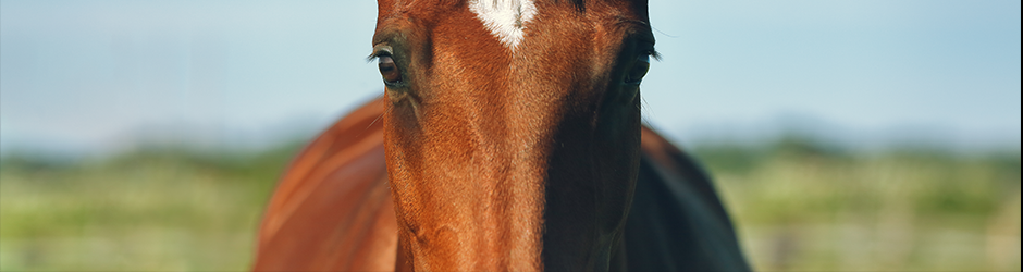 Skin+ Horse Placenta Concentrate Serum - เซรั่มรกม้า บำรุงผิวหน้า หน้าใสเด้ง ลดรอยสิว ลดริ้วรอย (10 mL)