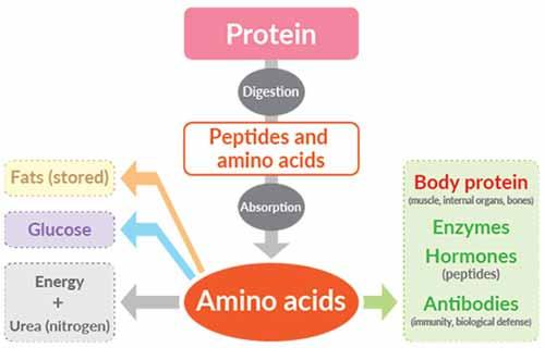 biovitt Whey Protein Isolate Chocolate Flavor - ไบโอวิต เวย์โปรตีน ไอโซเลท รส ช็อกโกแลต (200 กรัม)